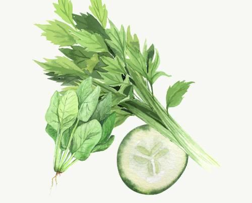 Celery Kale Spinach